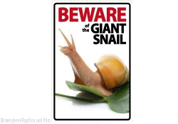 Beware of the Snail