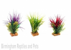Komodo Oasis Plant (3 colours available)