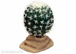 Komodo Barrel Cactus