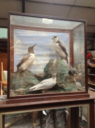 Victorian Taxidermy Birds