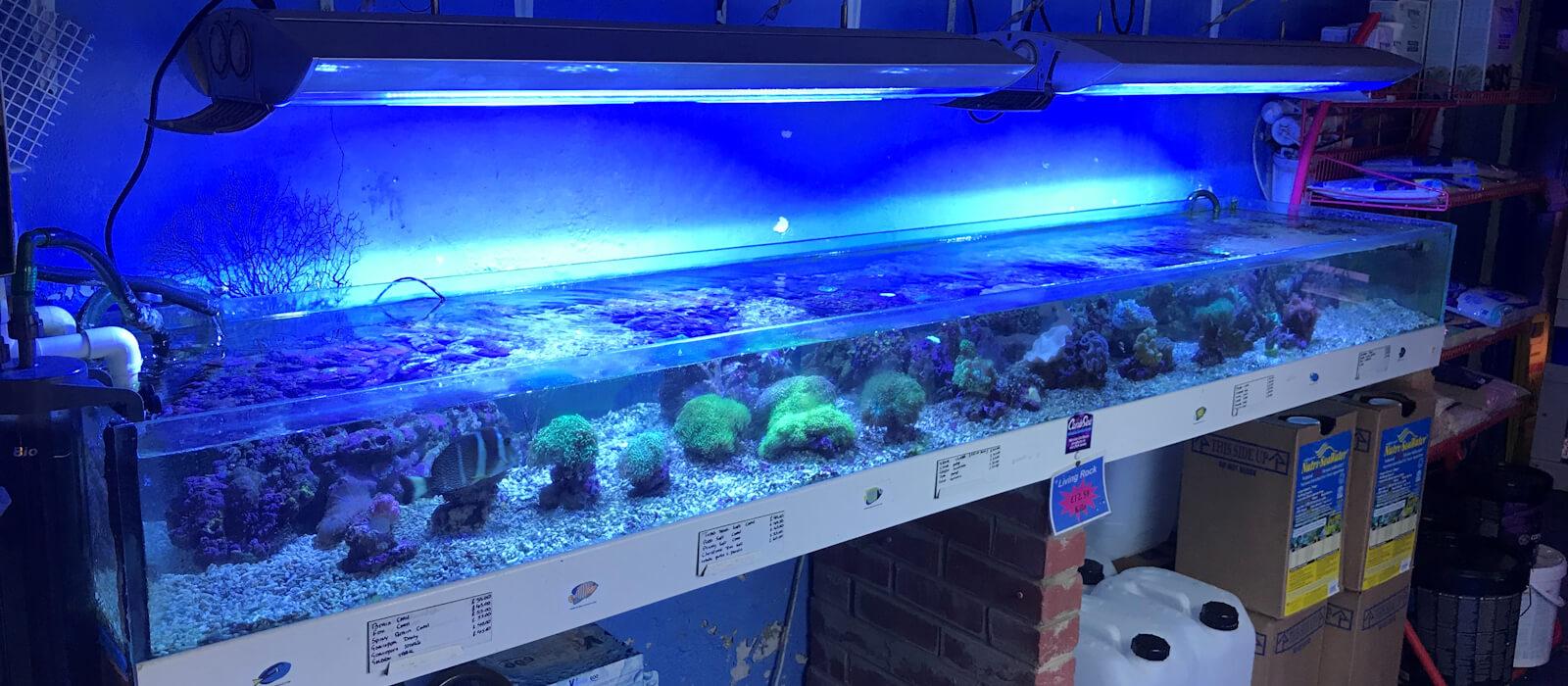 Kingfisheries Aquarium