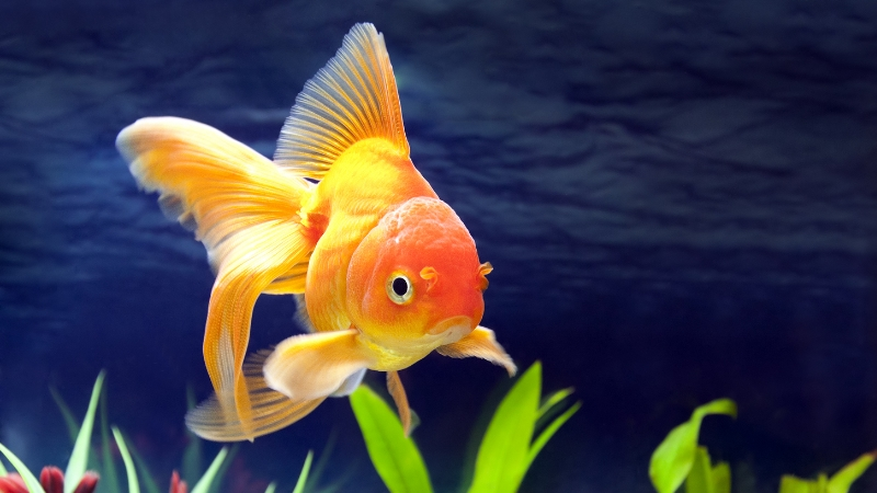 Fish Tank Suppliers Wakefield - Nautilus Aquatics