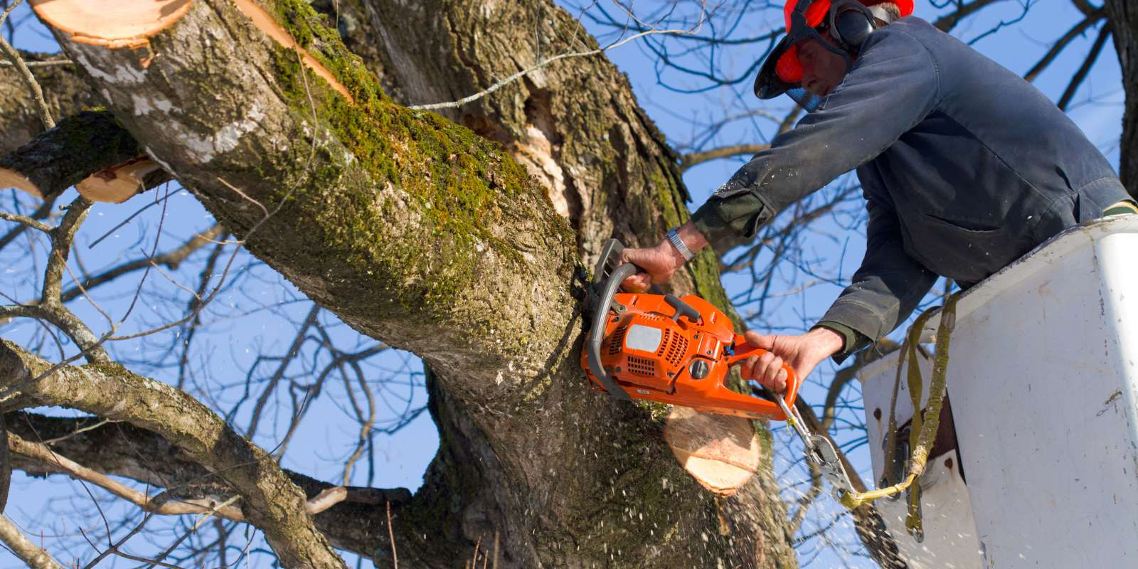 Tree Work Services