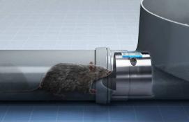 Rats & drains