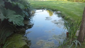 Maintenance needs to be carried out in order to prevent build up of mess in your pond