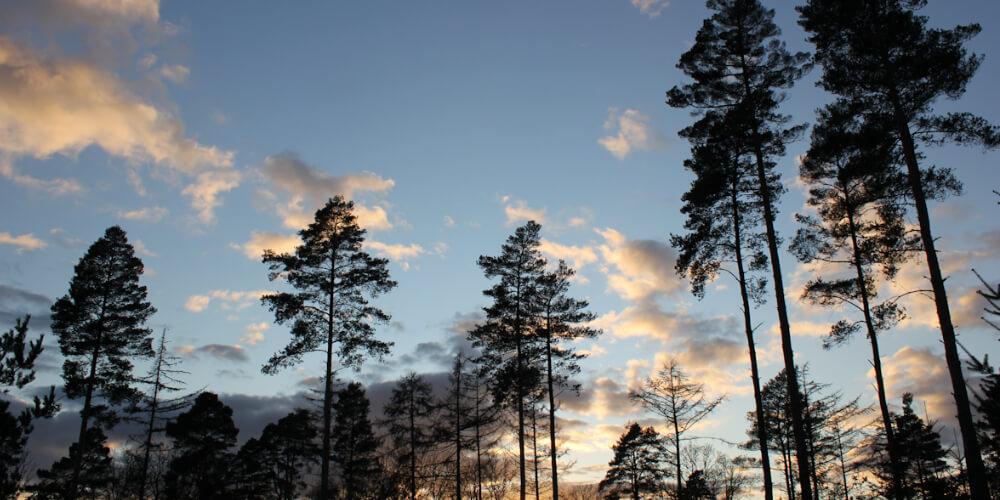Tree Planting & Re-vegetation