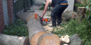 Tree Surgery Services Oxford