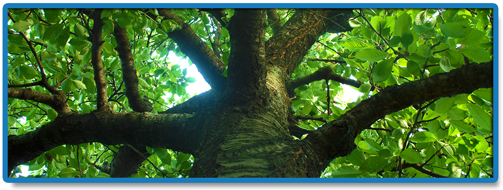 Exceptional Tree Surgery Services...