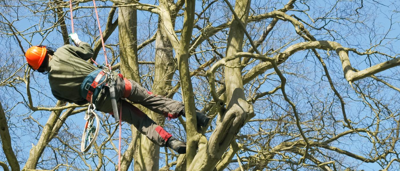 Tree Surgery Buckinghamshire