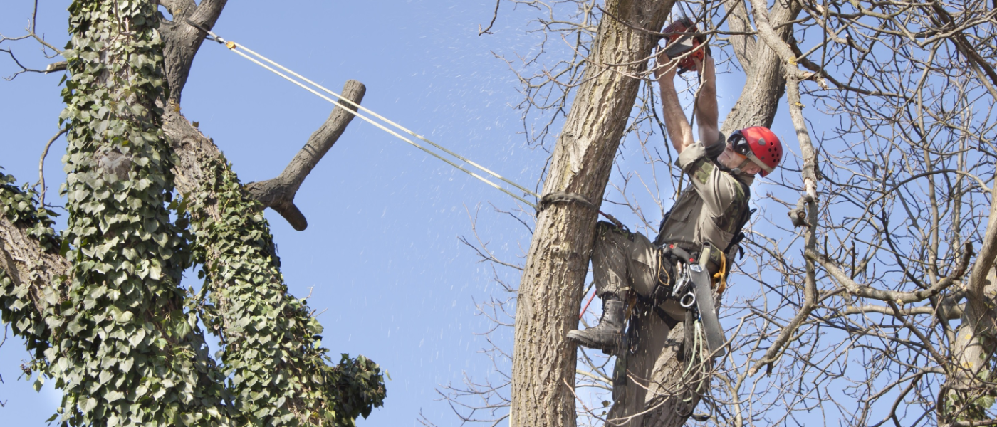 Tree Surgeons in Milton Keynes